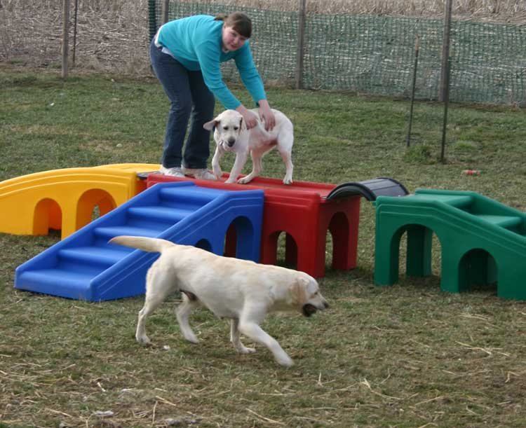 Dog Backyard Playground Ideas : Lucky Dog Lodge  dog activities